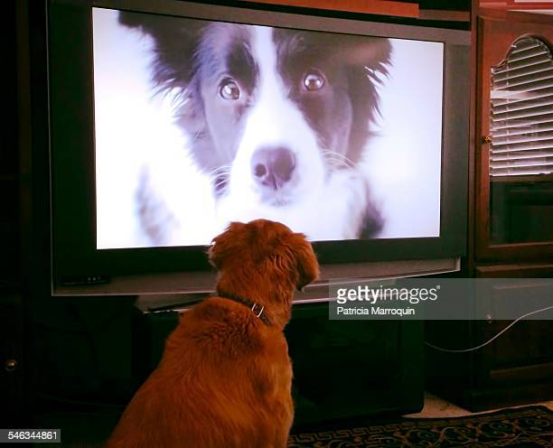 Pets Watching TV