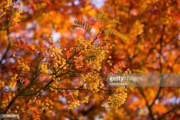 Pettifers Garden in autumn
