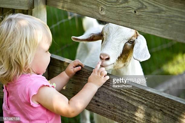 Zoo interactif enfant et de chèvre