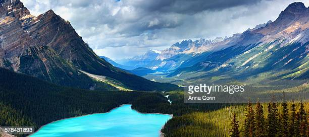 Peyto lake along Icefields Parkway, summer
