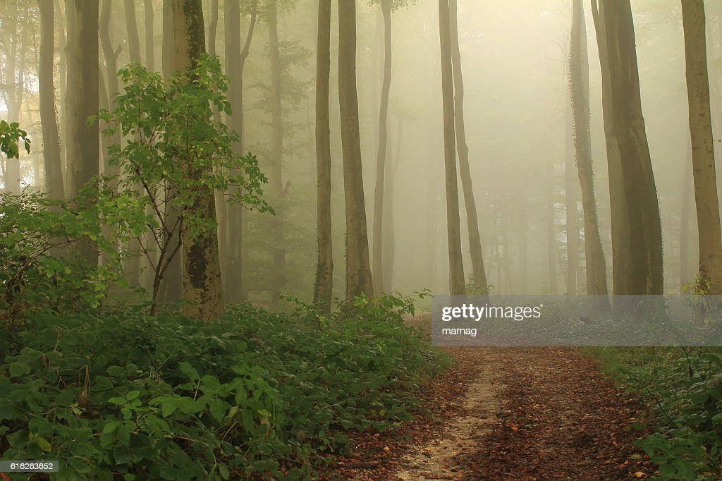 Pfad des Nebels : Stock Photo