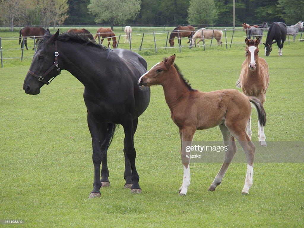 pferde : Foto de stock