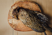 The owner of the smoke house has placed the pheasant down on a table, getting ready in the meanwhile to pluck, clean, and make it ready to sell.
