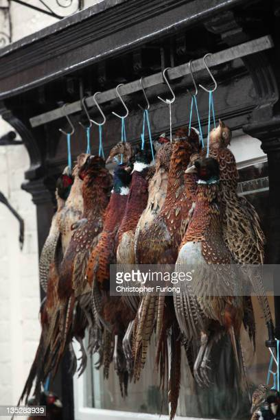 Pheasants hang outside Andrew Francis butchers in the rural town of Ludlow in Shropshire on December 8 2011 in Ludlow England With a weak outlook at...