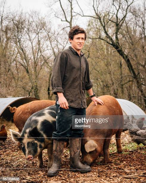 Phil Haynes assistant livestock manager of Stone Barns Center for Food and Agriculture stands for a photograph with Red Wattle pigs at the company's...