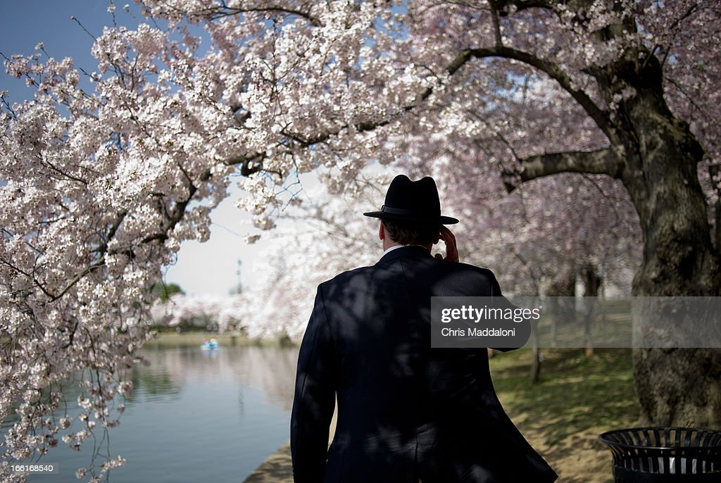 Phil Jones, from Arlington, Va., adjusts his hat as he walks along the TIdal Basin with the blooming Cherry Trees.