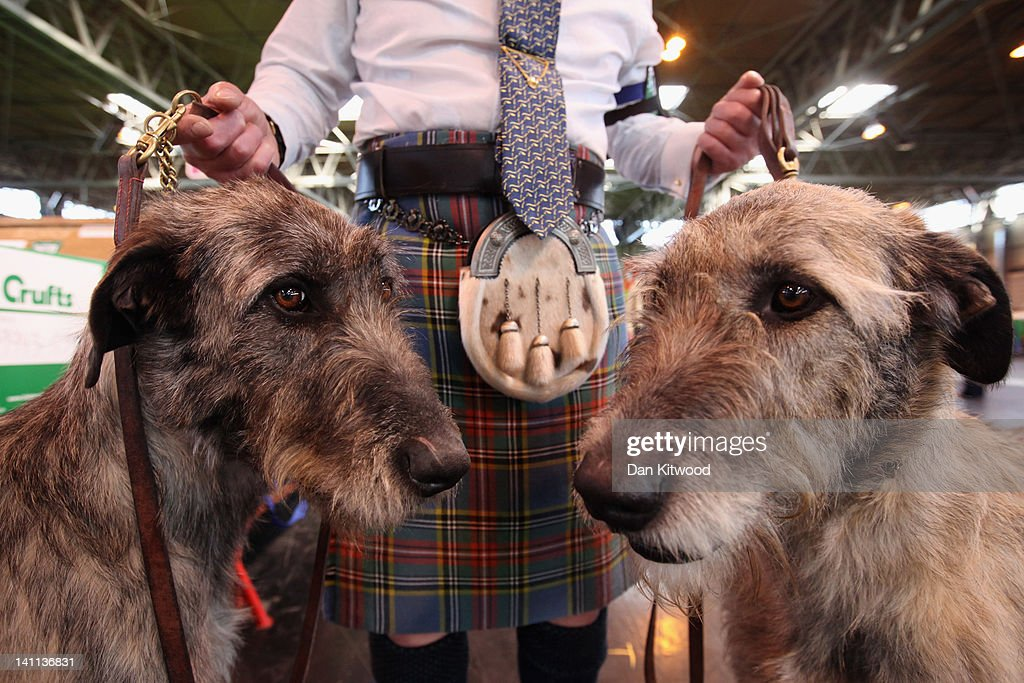 Phil Poole holds his two Irish Wolfhounds on the fourth and final day of Crufts at the Birmingham NEC Arena on March 11, 2012 in Birmingham, England. During the annual four-day competition nearly 22,000 dogs and their owners will compete for a variety of accolades, ultimately seeking the coveted title of 'Best In Show'.