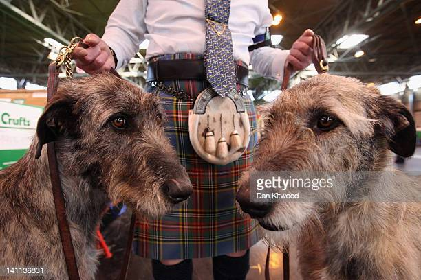 Phil Poole holds his two Irish Wolfhounds on the fourth and final day of Crufts at the Birmingham NEC Arena on March 11 2012 in Birmingham England...