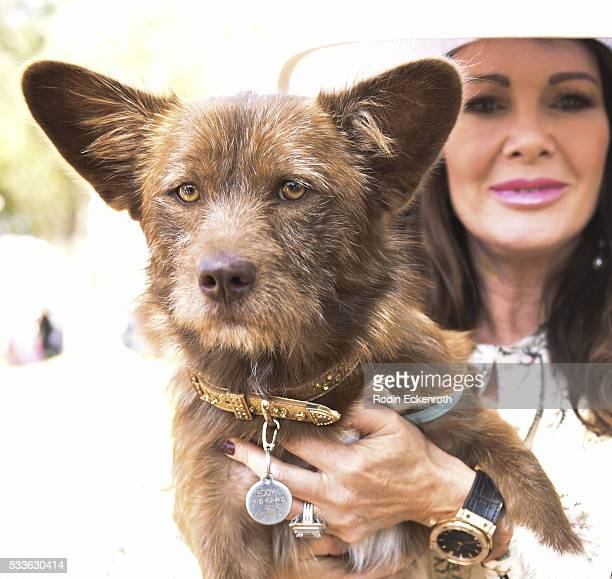 Philanthropist and host Lisa Vanderpump shows off rescue Yulin dog Teddy Li at World Dog Day on May 22 2016 in West Hollywood California