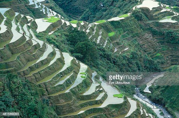 Philippines Luzon Island Near Banaue Rice terraces