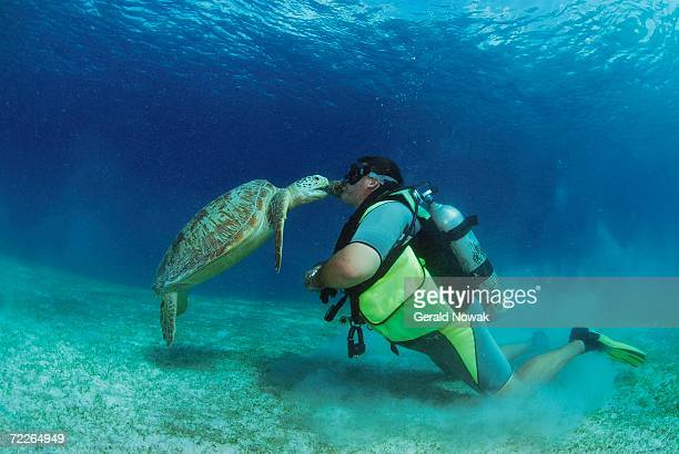 Philippines, scuba diver kissing green sea turtle, underwater view