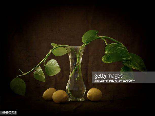 Philodendron and Lemons