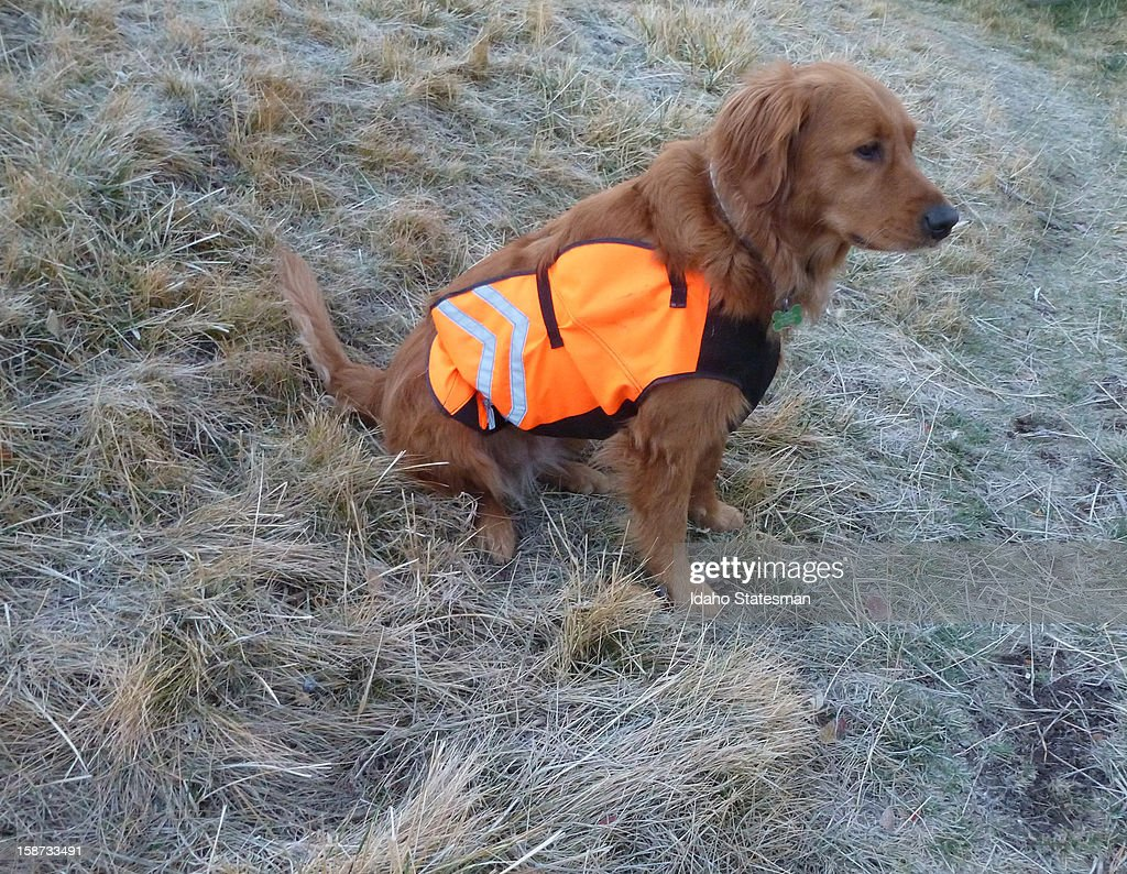 Phoebe's lightweight chest protector is good for protection from barbed wire thorns and scratchy plants while dryland hunting