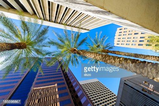 Phoenix, en Arizona, gratte-ciels et palmiers sur la ville