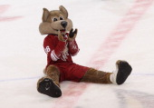 Phoenix Coyotes mascot Howler performs during the NHL game against the Columbus Blue Jackets at Jobingcom Arena on January 23 2013 in Glendale...