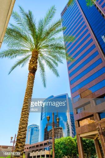 Phoenix cityscape gratte-ciel et palm tree