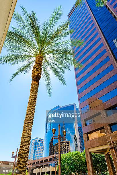 Phoenix skyscraper and palm tree cityscape