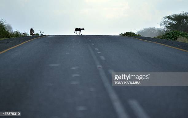 Photo made October 25 2014 shows a goat crossing a road at the top of a climb at the foothills of Mt Meru near Arusha close to the border of Kenya...