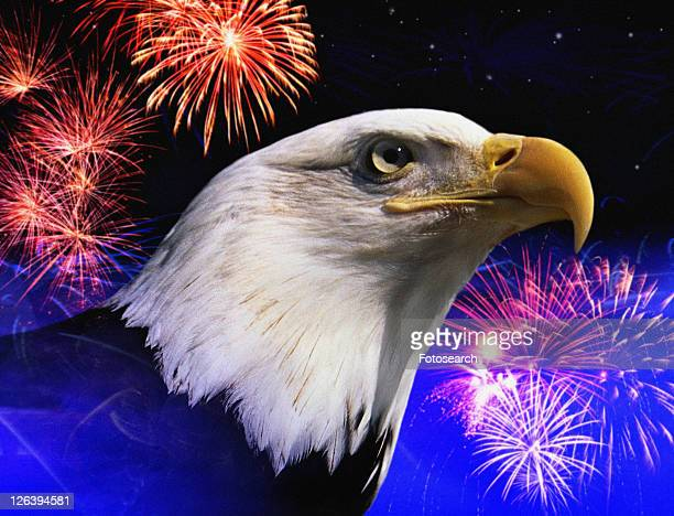 Photo montage: American bald eagle and fireworks