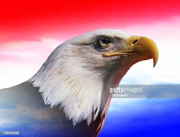 Photo montage: American bald eagle with red, white & blue sky