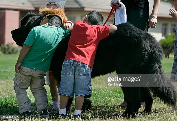 Photo of kids hugging and playing with Archie Story about Archie a 165–lb Newfoundland dog thats a therapy dog for abused neglected and emotionally...
