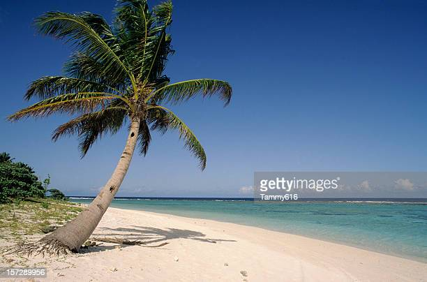 Photo of lone palm tree and white sand beach