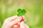 Four-leaf clover in Nature