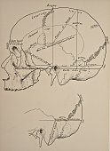 Photo representing locations of sinuses on the human skull 1899 From 'The Treatise of the Human Anatomy and Its Applications to the Practice of...