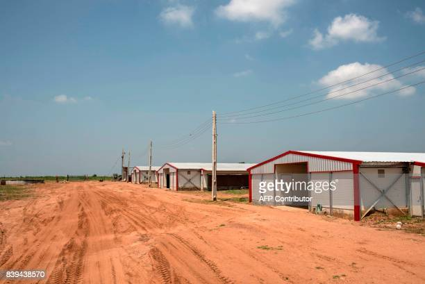 A photo shows a general view of the Valentine Chicken broiler rooms where chickens are raised on July 11 2017 Farming in Nigeria is not for the...