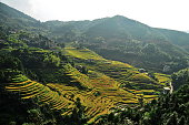 Photo shows terraced paddy fields on September 7 2014 in Suichuan County Jiangxi Province of China