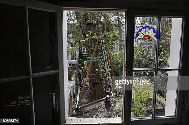 Photo shows the construction for the Anne Frank tree in Amsterdam on April 16 2008 Work on a steel beam construction to save a diseased chestnut tree...