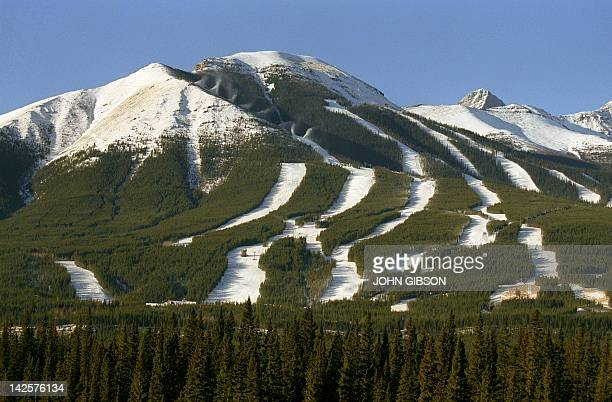 Photo taken 05 January 1988 of the Nakiska ski area the site selected for the alpine skiing events during the upcoming winter olympic games in...