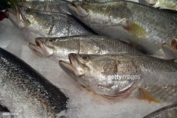 Photo taken early on December 23 2014 shows barramundi for sale at the Sydney Fish Market in Sydney The Sydney Fish Markets opened for its annual 36...