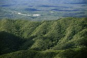 Photo taken from a Kyodo News helicopter on July 1 shows the Yambaru region in Japan's southernmost island prefecture of Okinawa Endangered species...