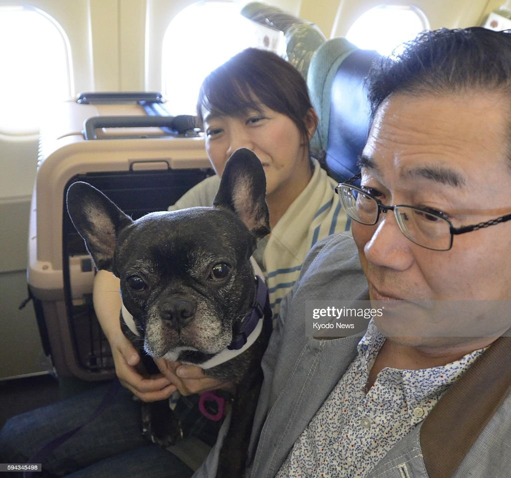 Photo taken May 20 inside the cabin of an ANA flight from Tokyo to Kushiro shows passengers traveling with their pet dogs during a trial chartered...