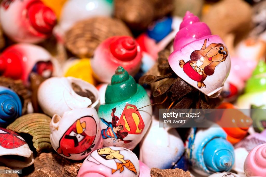 A photo taken on April 30, 2013 shows decorated hermit crabs presented during the 2013 Concours Lepine as part of Paris' Fair at the Porte de Versailles exhibition in Paris. The Concours Lepine is a French inventors' contest created in 1901.