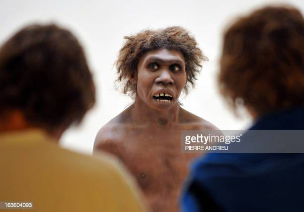TIME ** A photo taken on July 2 2008 in EyziesdeTayac Dordogne shows a model representing a Neanderthal man on display at the National Museum of...