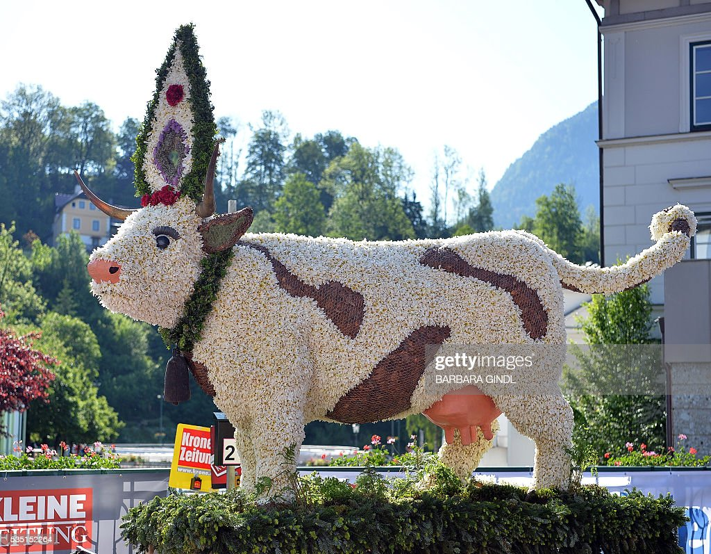 A photo taken on May 29, 2016 shows a cow figure made of Daffodil in a parade during the 57th Daffodil Festival in Bad Aussee. / AFP / APA / BARBARA GINDL / Austria OUT