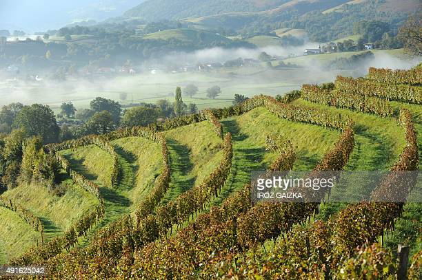 A photo taken on September 28 2015 shows a view of the vineyard of wine maker Olivier Martin in Irouleguy A handful of wine makers grow grapes on the...