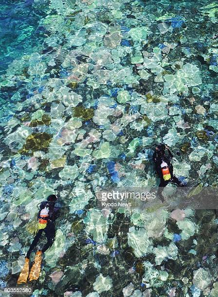 Photo taken Sept 12 from a drone shows Japan's largest coral reef Sekiseishoko between Ishigaki and Iriomote islands in the southernmost prefecture...