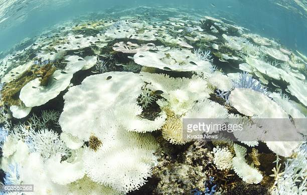 Photo taken Sept 12 shows Japan's largest coral reef Sekiseishoko between Ishigaki and Iriomote islands in the southernmost prefecture of Okinawa...