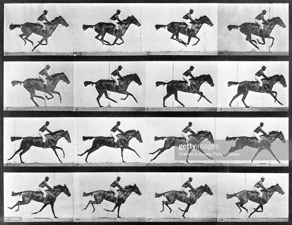 Photograph by Edweard James Muybridge (1830-1904), British-American photographer and pioneer of animal sequence photography. Muybridge photographed a horse using cameras with shutters set to a speed of 1/500 second and then released by threads broken by the horse or by clockwork. Thus, in 1877, his series of still photographs showed that a trotting horse lifts all its hooves off the ground at the same time. This led to studies of movement in humans and in 1880 he devised the zoopraxiscope, a precursor of cinematography. Plate from Muybridge�s �Animal locomotion: an electro-photographic investigation of consecutive phases of animal movements, 1872-1885�, published in Philadelphia in 1887.