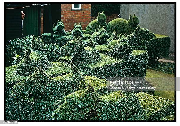 Photograph by Tony RayJones A garden near Wolverhampton with 16dogs two cats and a rat Photograph taken for the Sunday Times Magazine Happy...