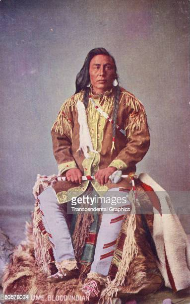 A photograph depicts Black Plume a Native American member of the Blood tribe of the Blackfoot Confederacy in traditional clothing 1900s The tribe is...