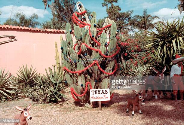 Photograph of a Texas front yard with a cactus Christmas tree 1949 Screen print from a photograph
