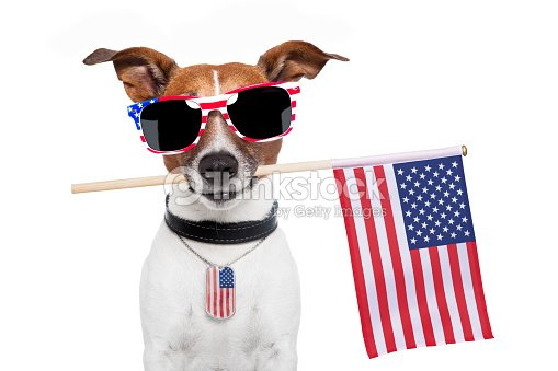Photograph of a very American dog
