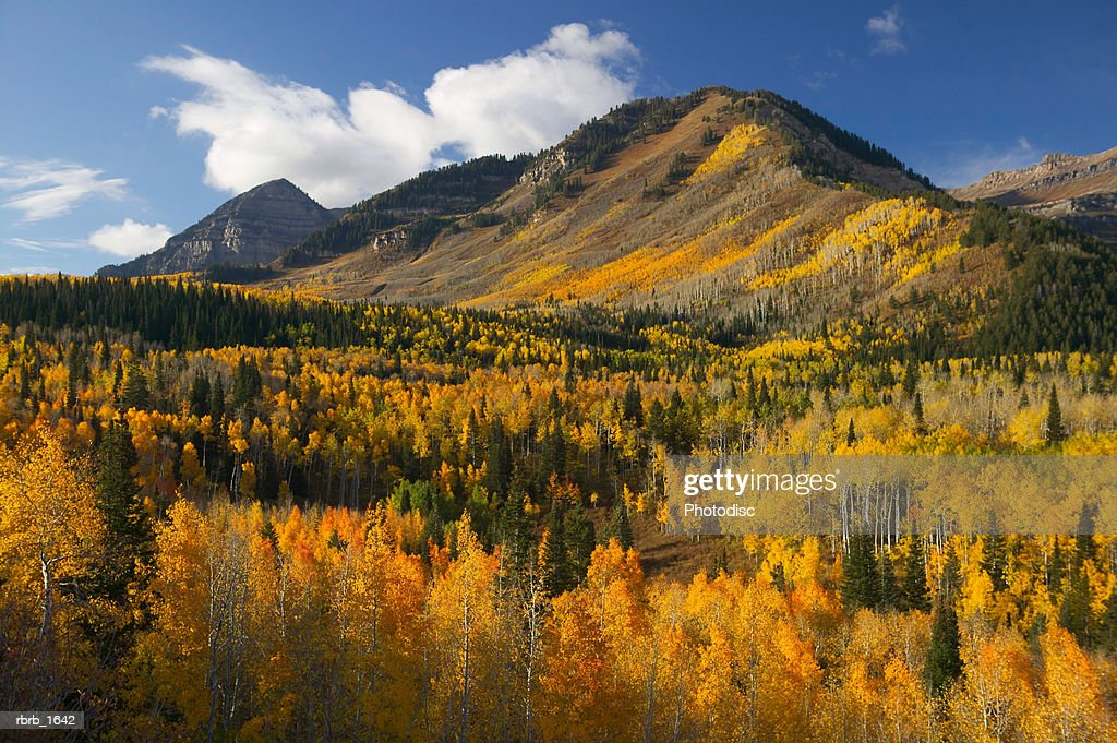 photograph of the beautiful golden autumn colors in the mountains : Stock Photo
