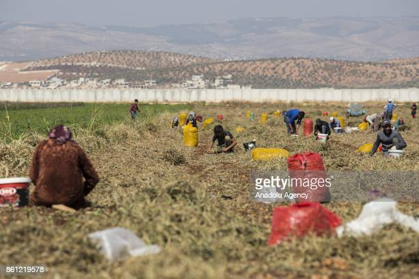 A photograph taken from Hatay's Reyhanli district located in Turkish side of the Syrian border shows Syrians work on a field near the border line...