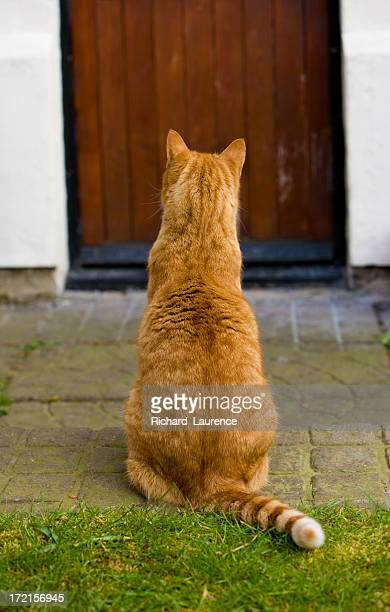 A photograph taken from the back of a ginger cat