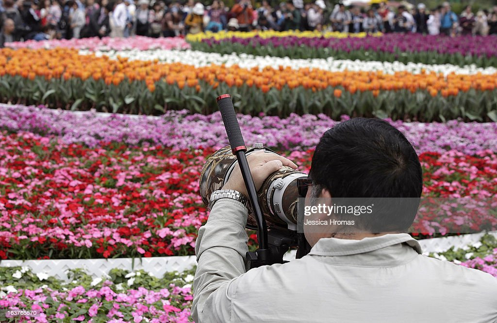 Photographer enthusiasts photograph a sea of flowers at the 2013 Hong Kong Flower Show at Victoria Park on March 15, 2013 in Hong Kong, Hong Kong. The 2013 Hong Kong Flower Show opened today and will continue until March 24, 2013.